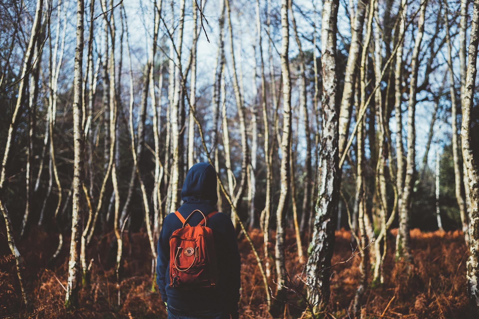 Jongen wandelt in het bos