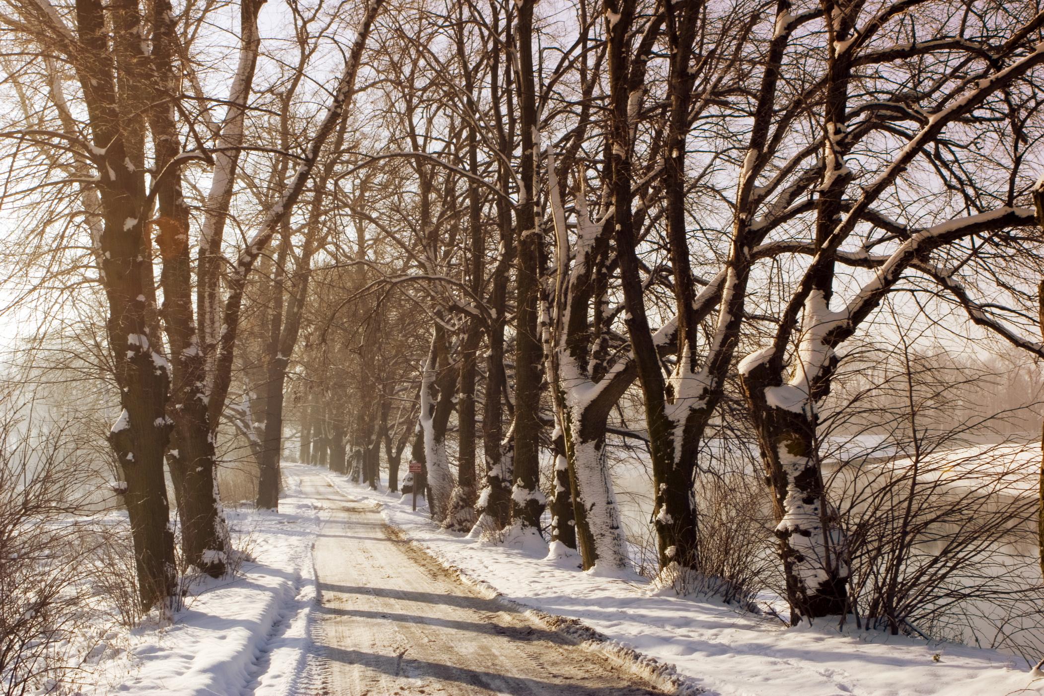 Winters landschap met veel besneeuwde bomen en een oprijlaan.